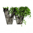 Green ivy on 3d stone letter - w — Stock Photo #6050548