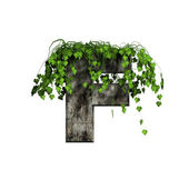 Green ivy on 3d stone letter - f — Stock Photo