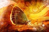 бабочка — Стоковое фото