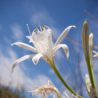 Close Up of o white flower - Stock Photo