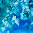 Blue leaves — Stock Photo