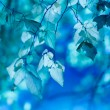 Stock Photo: Blue leaves