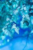 синие листья — Стоковое фото