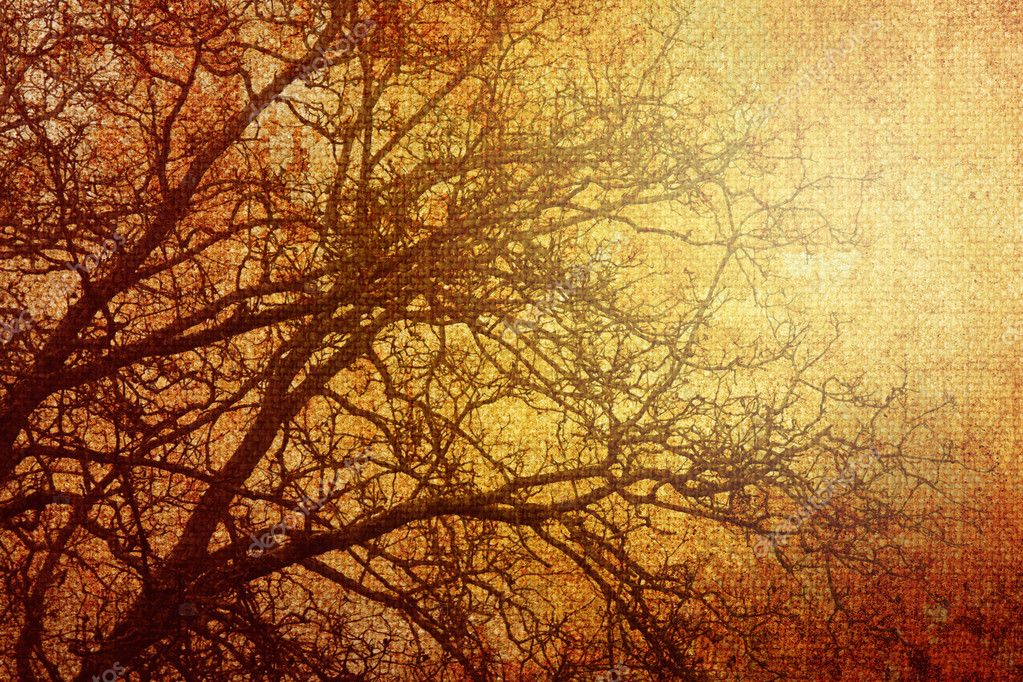 Grungy picture of a tree — Stock Photo #6100754