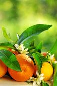 Pomarańczowe owoce i kwiaty. — Zdjęcie stockowe