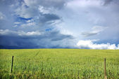 Thunderstorm wheat field. — Stock Photo
