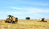 Combine harvesting wheat in portuguese field. — Stock Photo