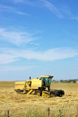 Combine harvester working a wheat field. — Стоковое фото