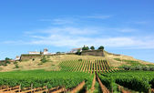 Vineyard at Portugal,Estremoz, Alentejo region. — Stock Photo