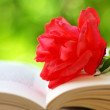 Red rose on the book — Stock Photo #5996036