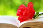 Red rose on the book — Foto de Stock