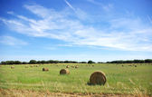 Agricultural landscape of hay bales in a field — Stock Photo