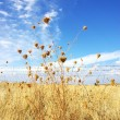 Dry field, alentejo region, Portugal. — Stock Photo