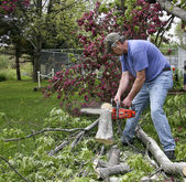 Chainsaw cutting downed tree — Stock Photo