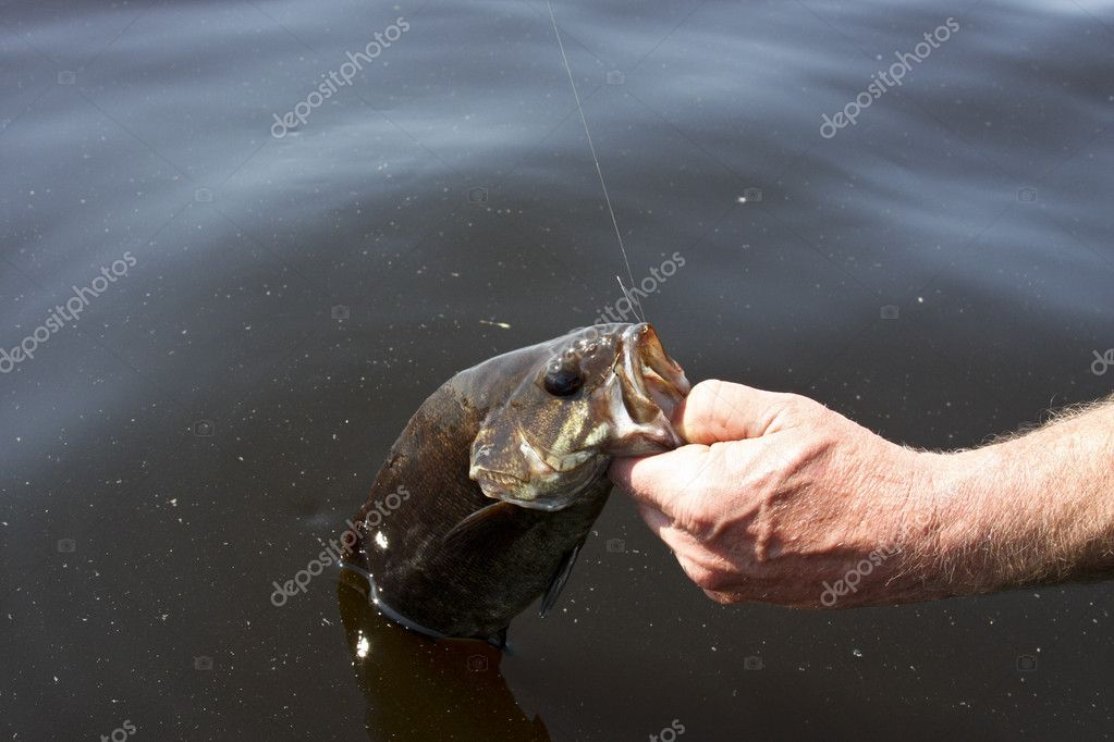 Small mouth bass caught fishing a freshwater lake — Stock Photo #5935714