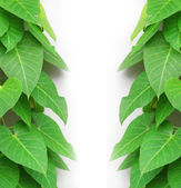 Green leaves with copyspace — Stock Photo