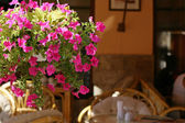 Flowers in summer open air cafe — Stock Photo