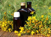 Medical herb -St John's wort (Hypericum perforatum) — Stock Photo