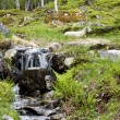 Ewe resting next to a mountain stream — Stock Photo