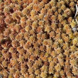 Sphagnum peat moss - Stock Photo
