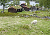 Sheep grazing between mountain cabins — Stock Photo