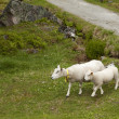 Ewe and lamb — Stock Photo #5978769