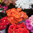 Variety of colourful bouquets of flowers — Stock Photo #5844205