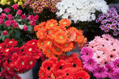 Variety of colourful bouquets of flowers — Stock Photo