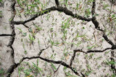 Cracked and Parched Dry Land in Drought — Stock Photo