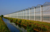 Greenhouse in the netherlands — Stock Photo