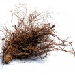 Stock Photo: Root wood