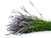 Lavender — ストック写真