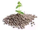 肥料撒き — ストック写真