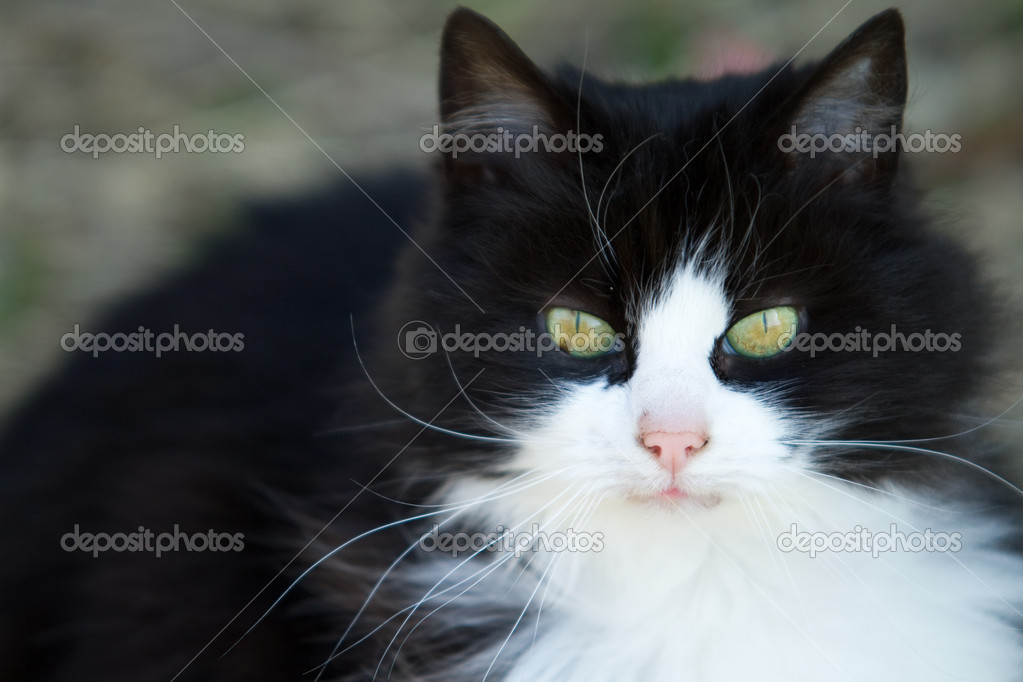 Black and white cat looking closely on something. — Stock Photo #5394225