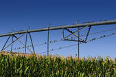 Sparrows roosting on irrigation system — Stock Photo