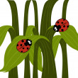 Ladybird couple — Stock Vector