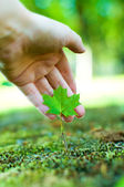 Care for nature — Stock Photo
