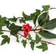 Holly and Ivy — Stock Photo #6231828