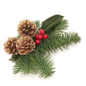 Christmas Decorative Spray — Stockfoto