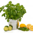 Stock Photo: Basil Herb and Citrus Fruit