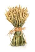 Wheat Bundle — Stock Photo