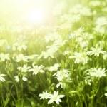 Spring background — Stock Photo #5518651