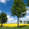 Stock Photo: summer landscape&quot