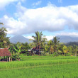 Rice fields — Stock Photo #6730808