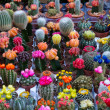 Colored cactus — Stock Photo