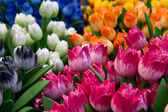 Colored wooden tulip — Stock Photo