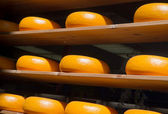 Holland cheese — Stock Photo
