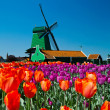 Windmill in holland — Stock Photo #5682500