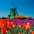 Stock Photo: Windmill in holland