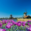 Windmill in holland — Stock Photo #5691082